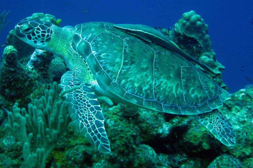 IMG_4165 turtle
