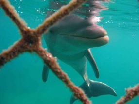 IMG_4263 dolphin