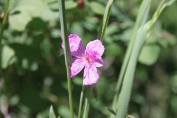 IMG_4169 rose