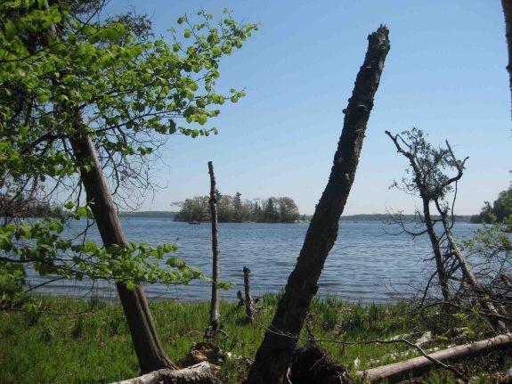 IMG_4399 trees