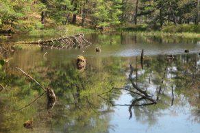IMG_4412 reflection