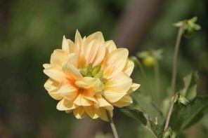 IMG_4373 flower