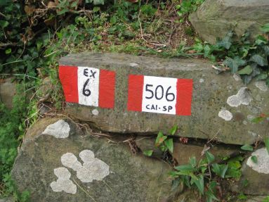 IMG_5078 trail
