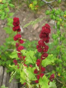 IMG_5384 flower