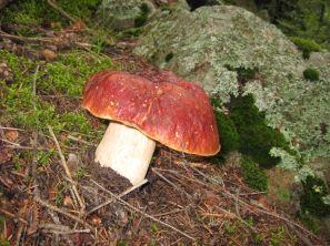 IMG_5481 mushroom