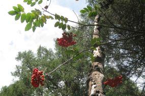 IMG_5821 berries
