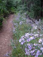 IMG_5828 wildflowers