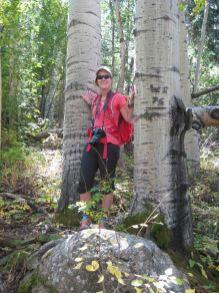 giant aspen trunks