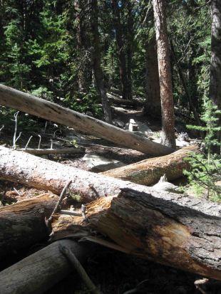 IMG_6100 fallen tree