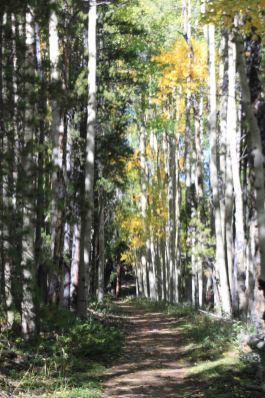 segment 4 of the colorado trail