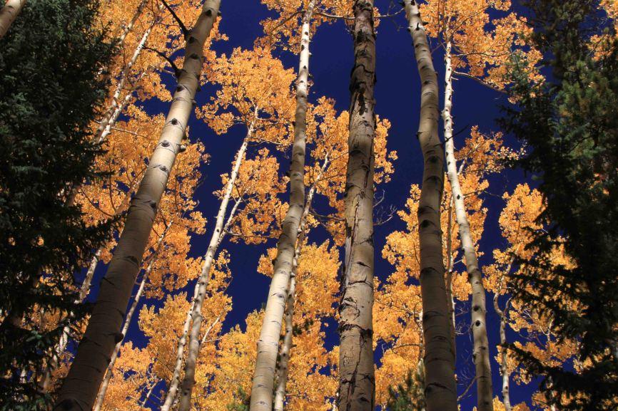 aspen on the colorado trail segment 4