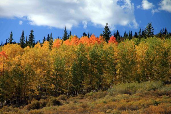 segment 4 colorado trail