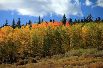 multi-colored aspen, fall hikes near denver