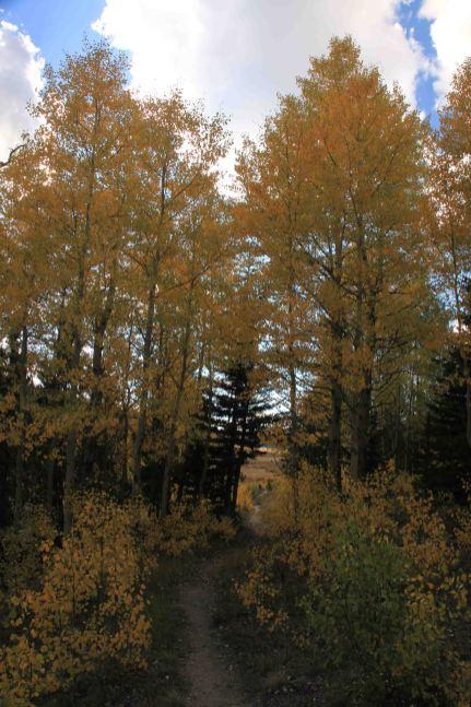 the colorado trail segment 4
