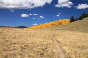 the colorado trail segment 5
