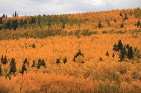 mountainside of aspen