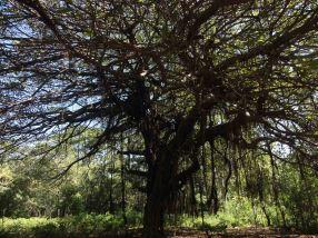 DSC02724 tree