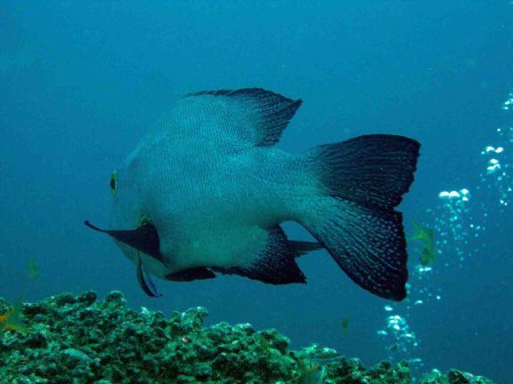 photo1430313417739 fish d1