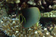 photo1430314024780 fish