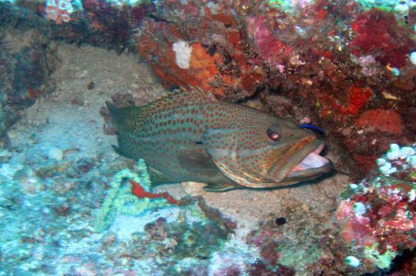 photo1430315299377 grouper