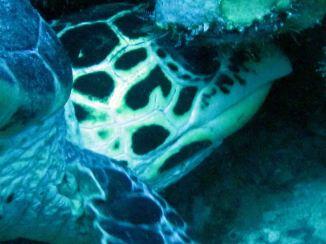 photo1430315997264 turtle