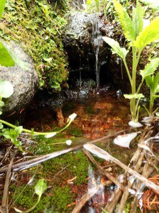 tiny trickling waterfall