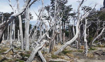 20151229_154147 trees