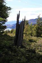 IMG_7832 tree stump