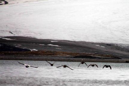 IMG_0243 birds adventuresofacouchsurfer