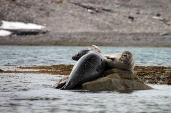IMG_0310 seals adventuresofacouchsurfer