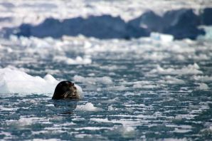IMG_8588 seal adventuresofacouchsurfer