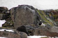 IMG_8637 goose adventuresofacouchsurfer