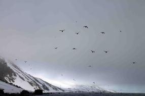 IMG_8657 birds adventuresofacouchsurfer