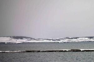 IMG_8690 walrus