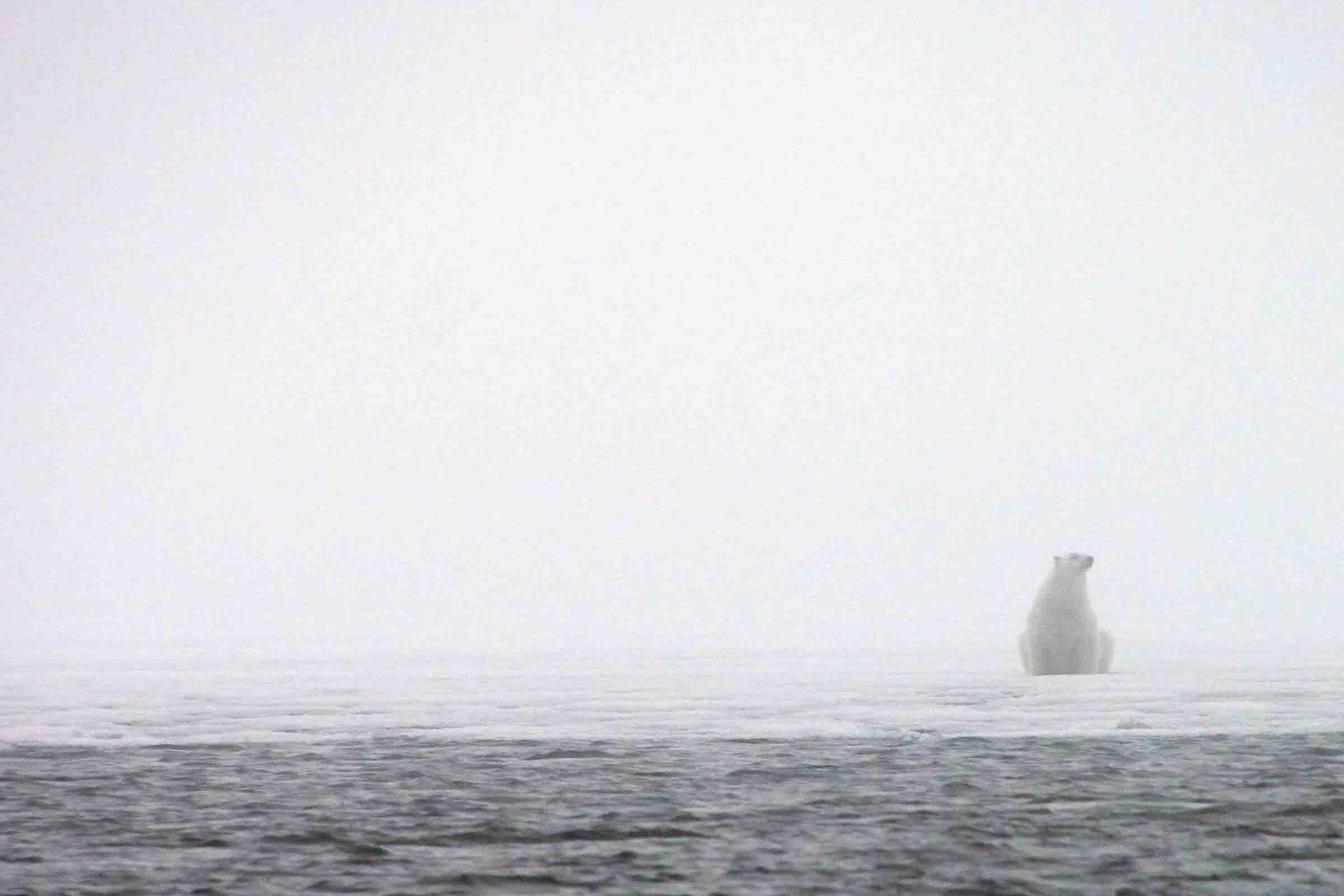 polar bear sitting on the ice