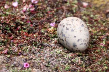 IMG_9919 egg adventuresofacouchsurfer