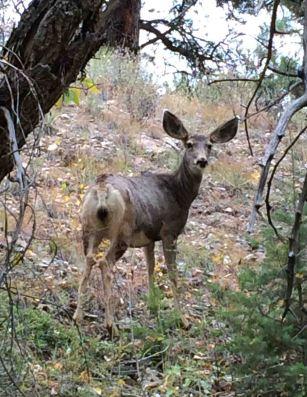 20160921_211435399_ios-deer