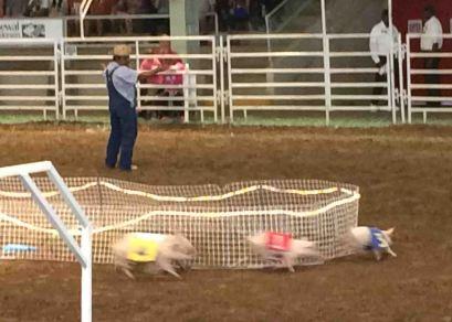 20161008_204039653_ios-pigs
