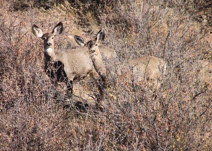 img_9414-deer