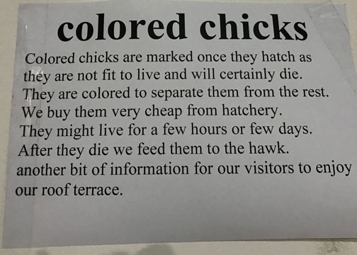 colored chick sign