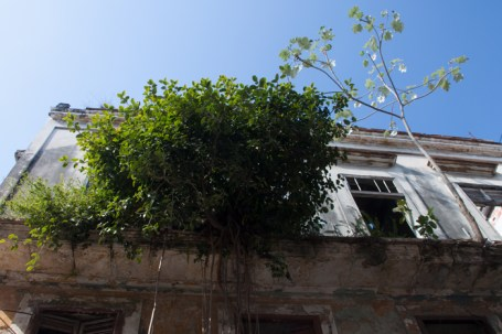 tree growing from building