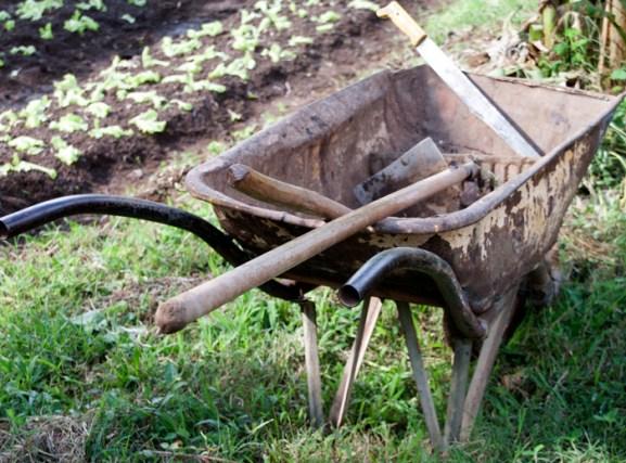 img_2108-wheel-barrow