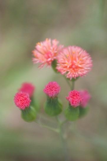img_2113-flowers