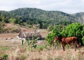 img_2159-tobacco-farm
