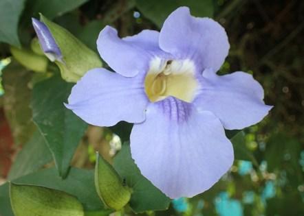 p2060023-flower