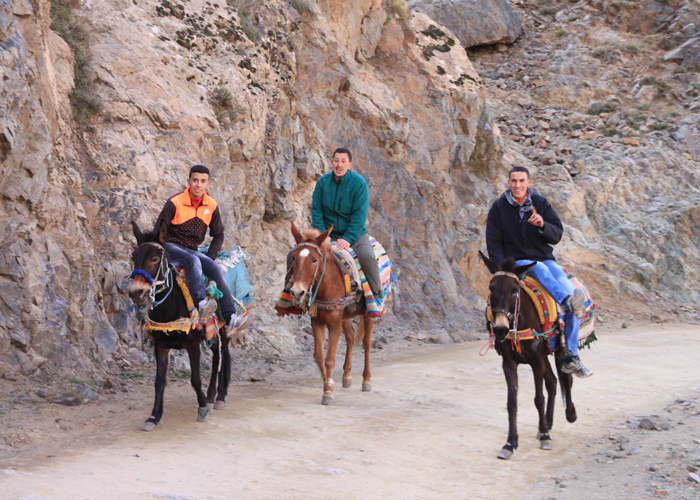 men on mules in the high atlas mountains