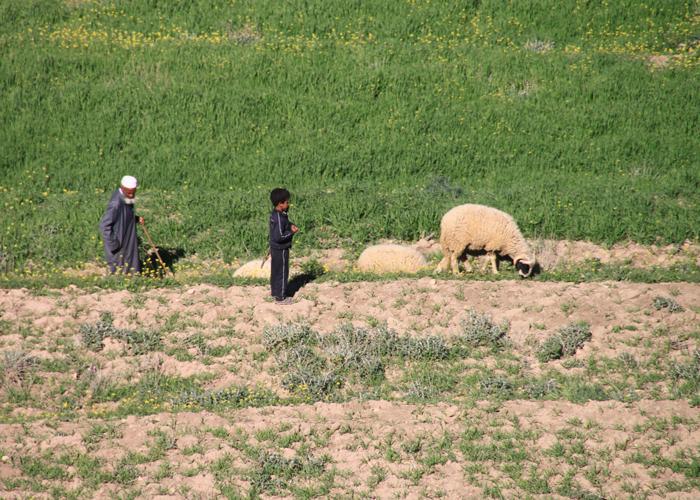 shepherds in asni ouirgane valley