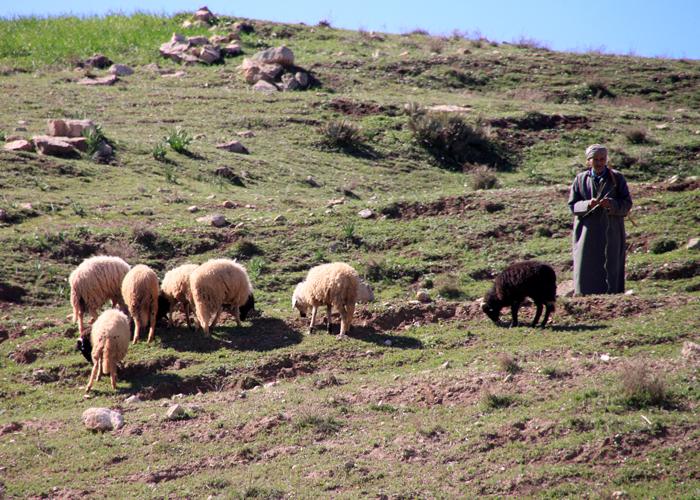 shepherd in asni ouirgane valley