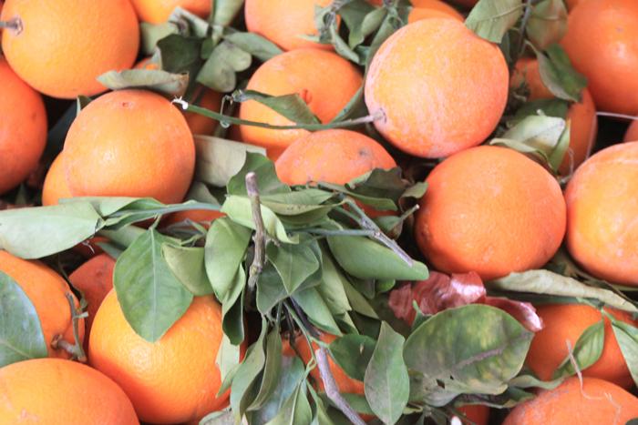oranges at at casablanca medina