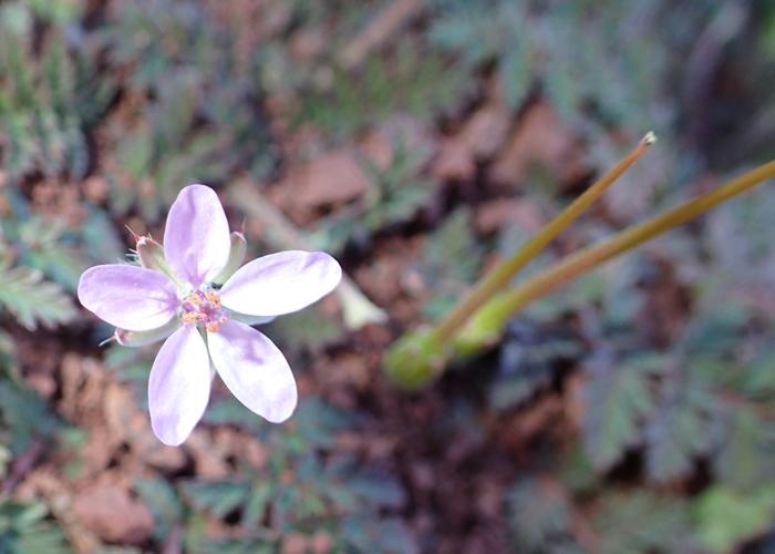 wildflower on tizi oudite trail